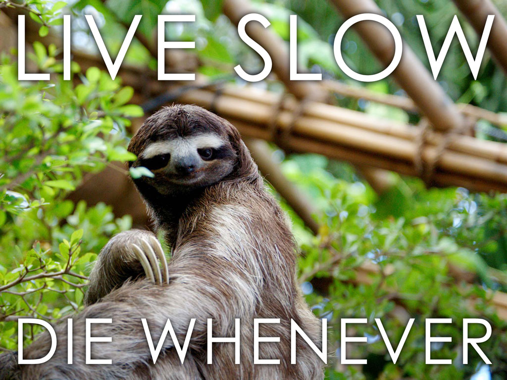 Sloth Life Cocopunk
